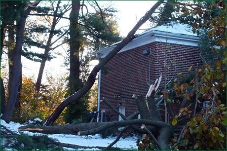 downed tree limb and roof damage