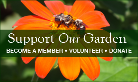 Support the Garden by becoming a member of Fanny Dwight Clark Memorial Garden, Inc.
